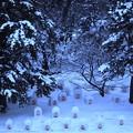 写真: 弘前城雪灯篭まつり