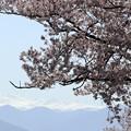 Photos: 松本 薄川沿い 桜と北アルプス01