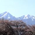Photos: 松本 薄川沿い 桜と北アルプス02