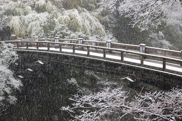 2018雪降る猿橋