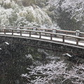 Photos: 2018雪降る猿橋