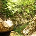 Photos: 新緑の渓谷