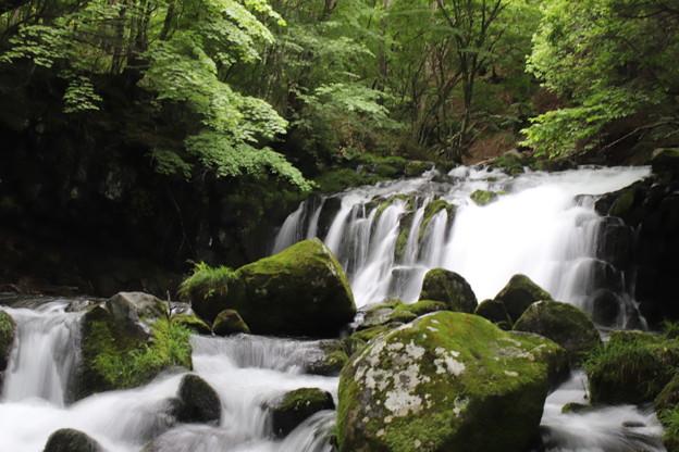 Photos: 蓼科大滝