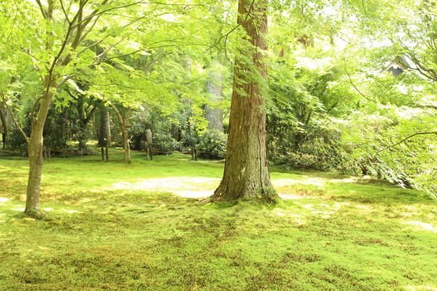 木漏れ日の庭園