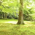 Photos: 木漏れ日の庭園