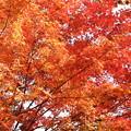 Photos: 小京都の紅葉02
