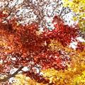 小京都の紅葉03