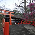 Photos: 輪橋と光琳の梅
