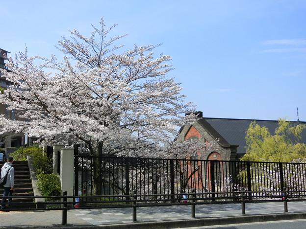 発電所と桜