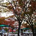 写真: ロームシアター前のカフェ