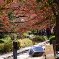 Photos: 哲学の道 02