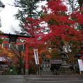 紅葉2018 鍬山神社 01