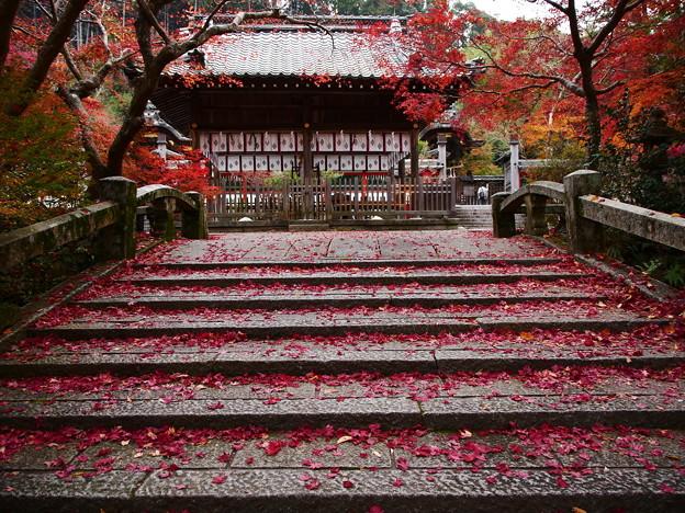紅葉2018 鍬山神社 04