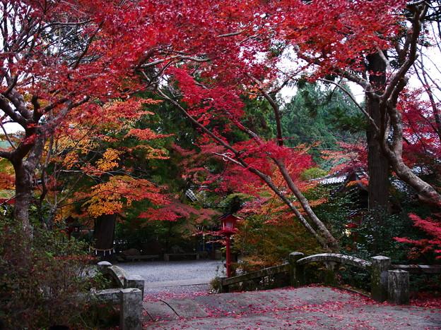 紅葉2018 鍬山神社 05