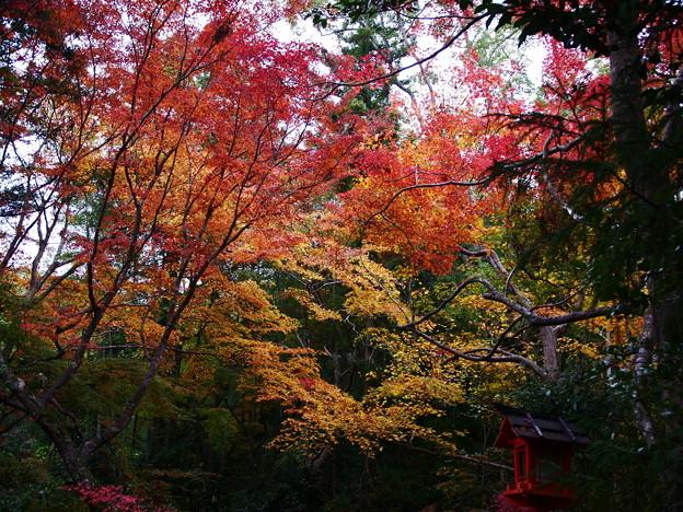 紅葉2018 鍬山神社 07