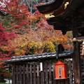紅葉2018 鍬山神社 08