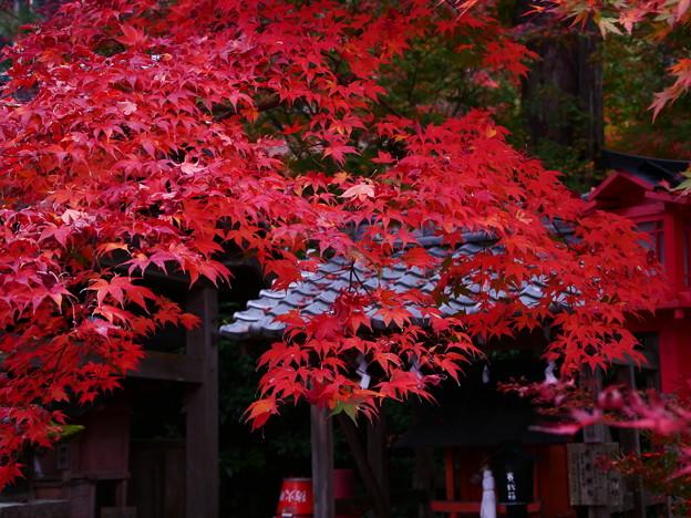 紅葉2018 鍬山神社 12