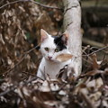 Photos: 山で見た猫