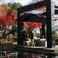写真: 紅葉2018 梅小路公園 03