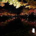 Photos: 紅葉2018 東寺 06