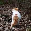Photos: 御所の猫