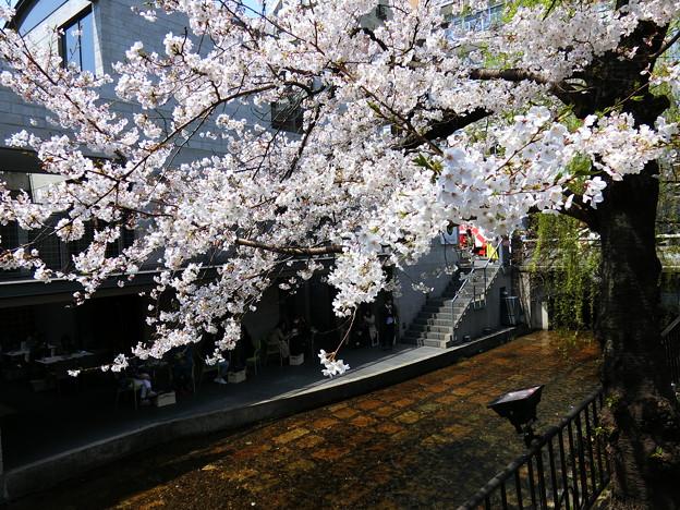 2019桜 三条木屋町 03