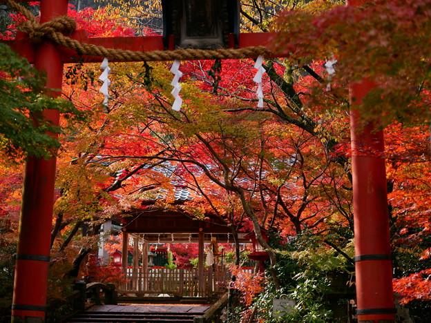 鍬山神社 紅葉2019 01
