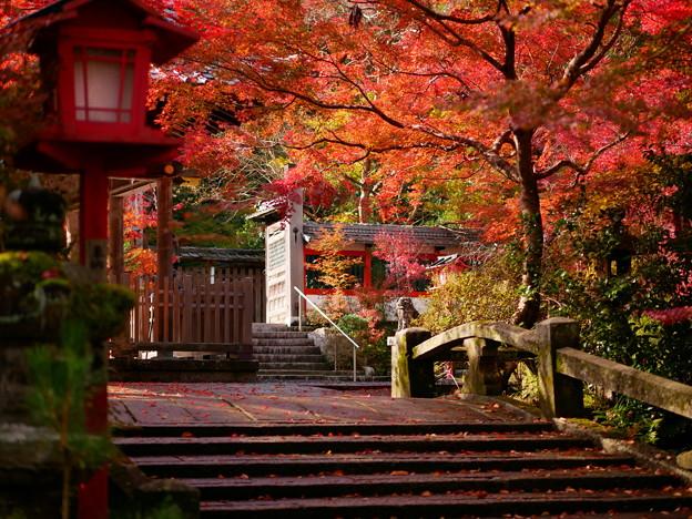 鍬山神社 紅葉2019 02