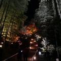 高台寺ライトアップ 紅葉2019 04