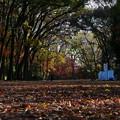 下鴨神社 糺の森 紅葉2019 01