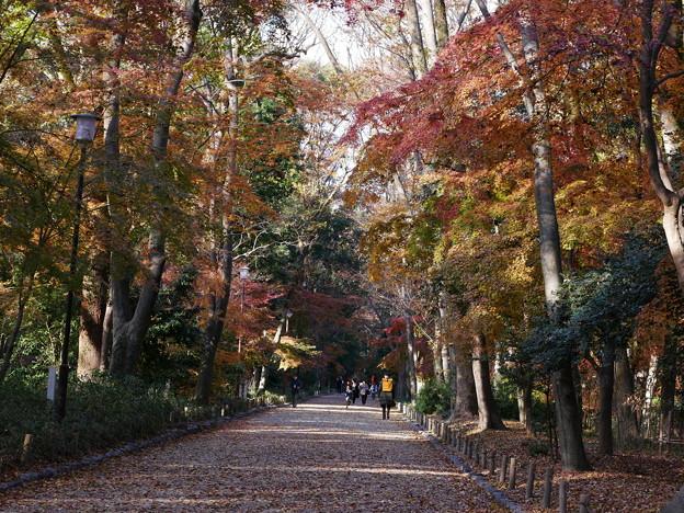 下鴨神社 糺の森 紅葉2019 04