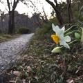 春の痕跡見つけました