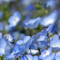 Photos: 今は、どんな花が咲いてるのかな