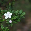 小さい花ですが