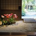 Photos: 加茂荘花鳥園 ダイヤモンドリリー展