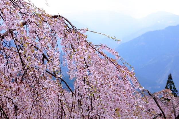 写真: 春のやまなみ