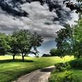 公園の散歩道