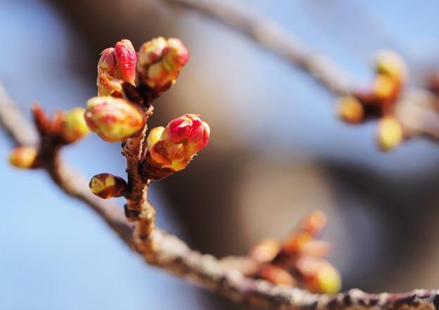 Photos: 春はそこまで