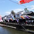 写真: 倉の町と鯉のぼり