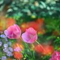 写真: 花遊び