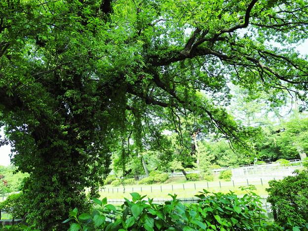 とりつかれた立木