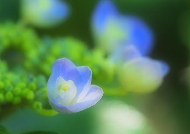 Photos: ひっそりと咲く