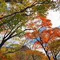 写真: 赤城山大沼周辺