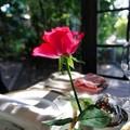 食卓の赤いバラ