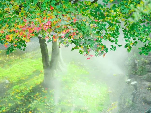 Photos: 霧の中で
