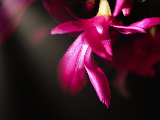 ピンクの輝き