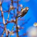 写真: 見慣れない鳥
