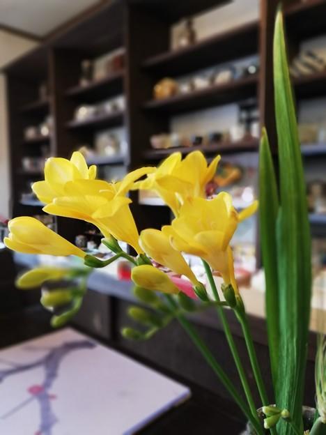 写真: 早春の香り