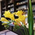 Photos: 早春の香り