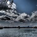 波志江沼のサクラ1